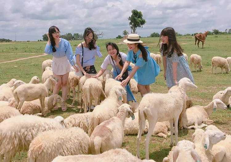 Đồi Cừu Suối Nghệ, cánh đồng check in chụp hình siêu ảo mới