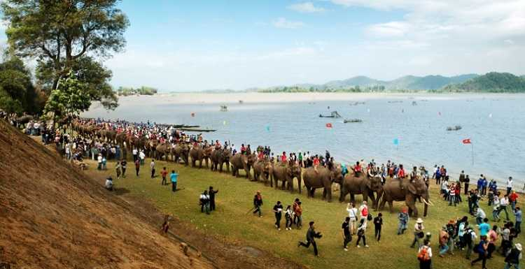 lể hội đua voi