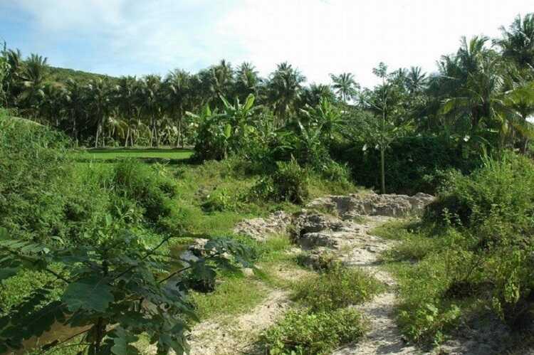 Suối Tiên là nguồn sống của thảm thực vật nơi đây