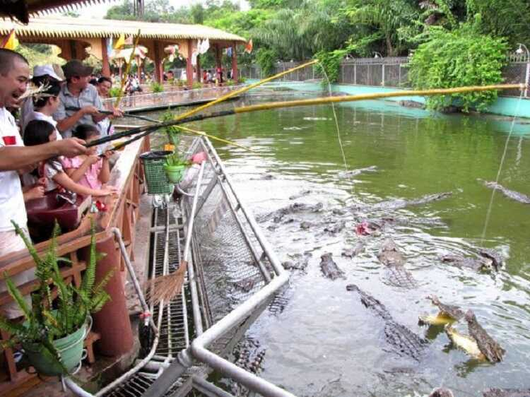 Tham quan trại nuôi cá sấu