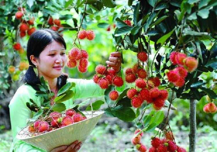 cảnh đẹp vườn trái cây