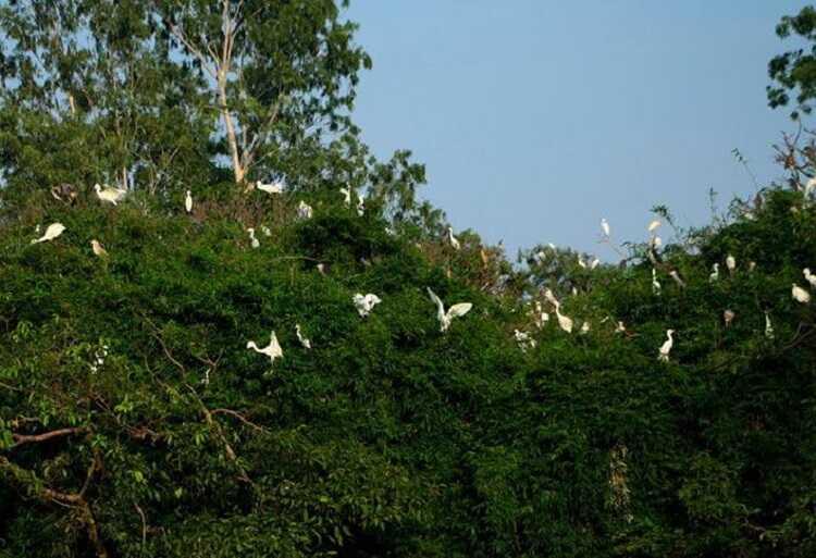 Đảo Cò Chi Lăng Nam làm sống dậy ký ức tuổi thơ