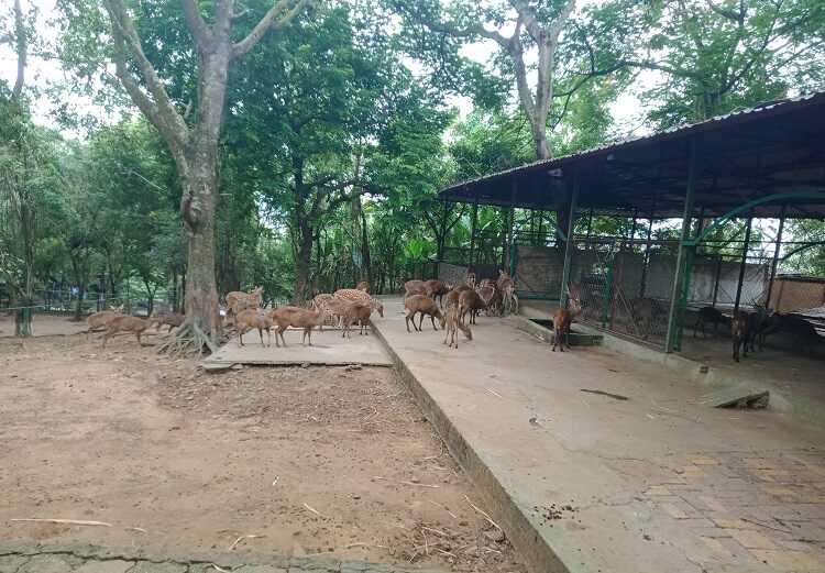 Vườn động vật hoang dã