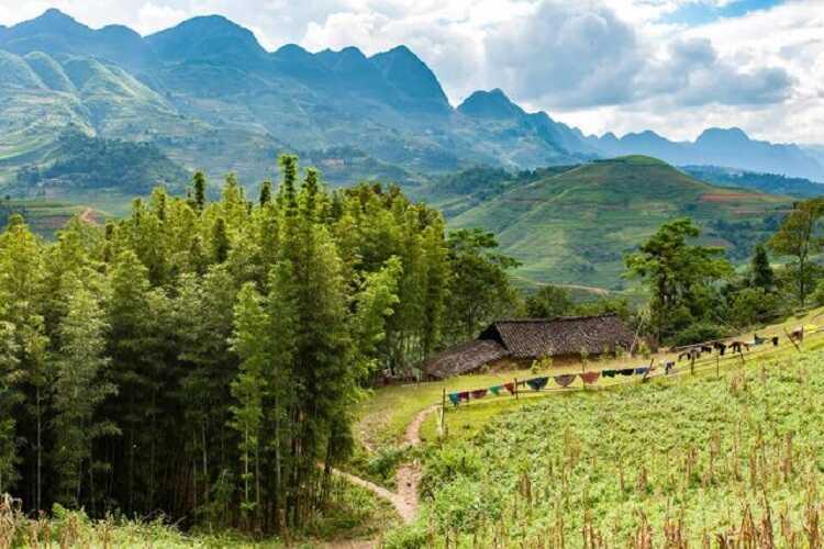 Rừng thông Yên Minh ở Hà Giang có phải là một Đà Lạt của Đông Bắc?