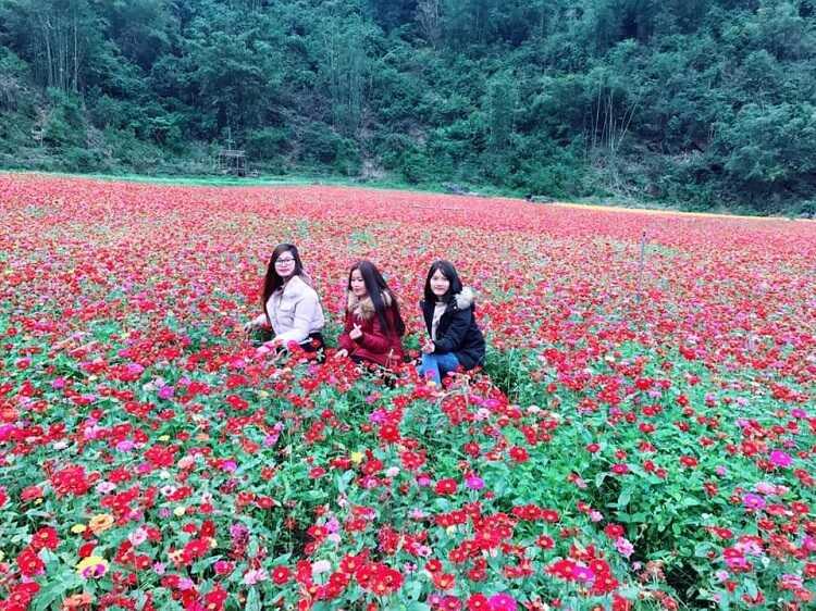 Thung lũng hoa Bắc Sơn Lạng Sơn, thiên đường sống ảo muôn sắc màu