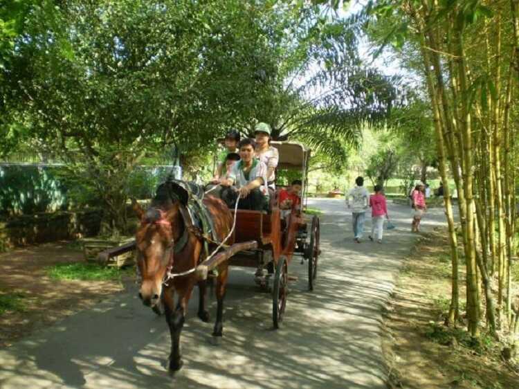 Đi xe ngựa quanh Cồn Phụng