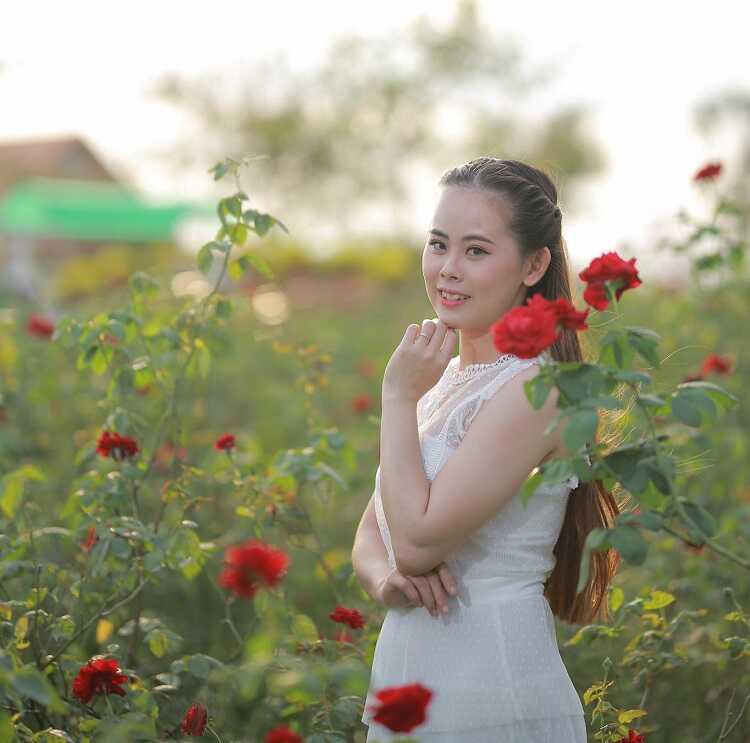 Cánh đồng hoa hồng Sa Đéc